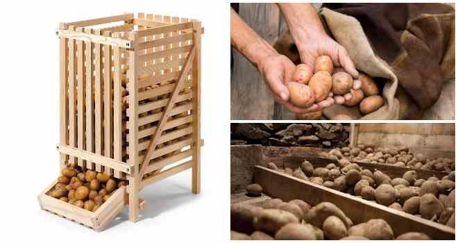 картошка хранение