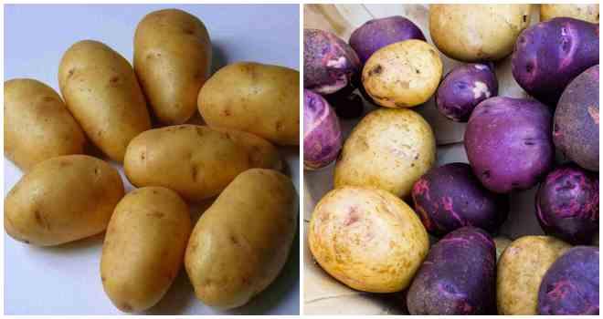 сорта картошки