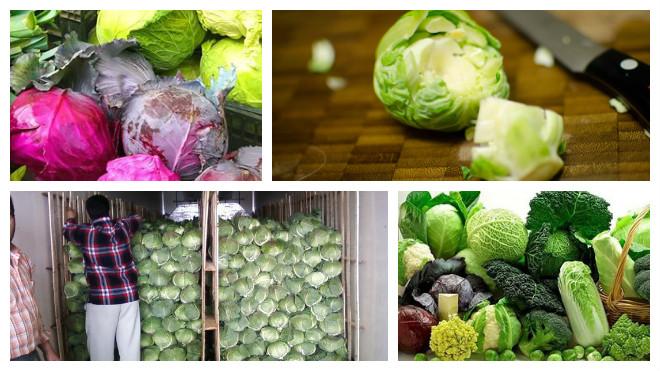 Способы хранения капусты дома