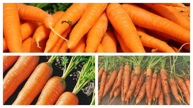 Лежкие сорта среднеспелых морковки