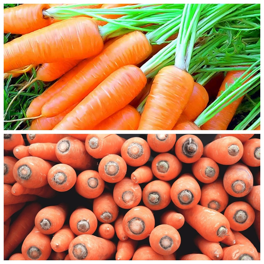 Основные правила, как хранить морковь, чтобы сохранить ее свойства