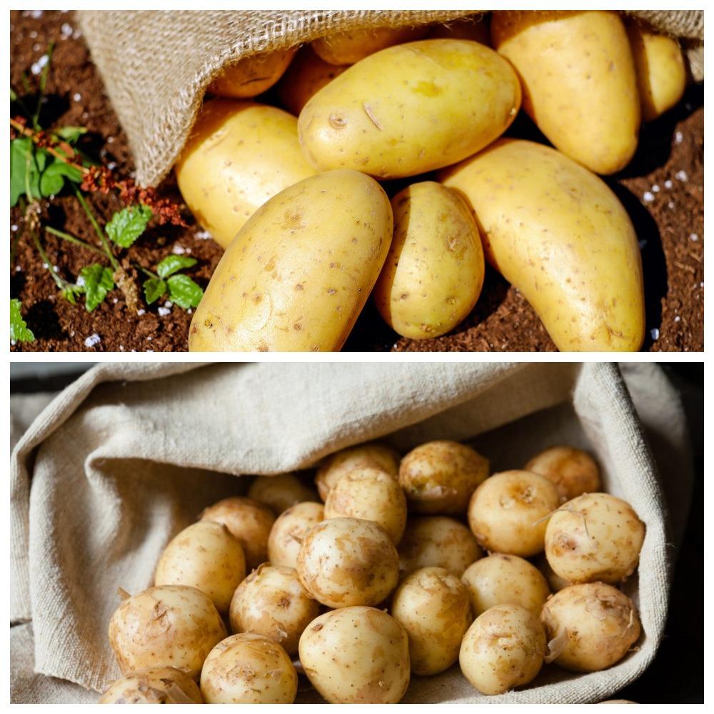 Как правильно хранить очищенную картошку