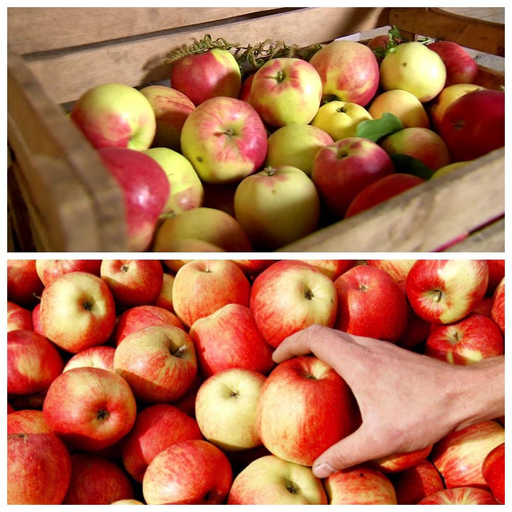 Правила хранения яблок