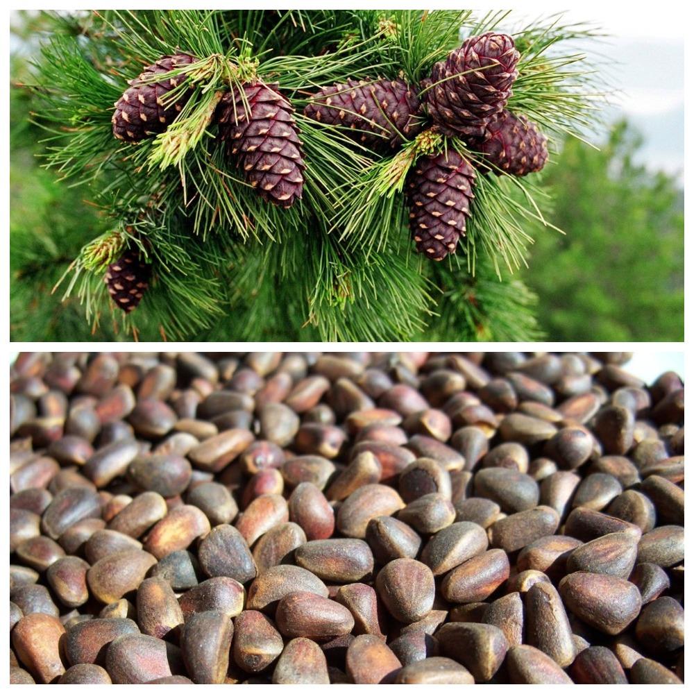 Как и при каких условиях хранить кедровые орехи?