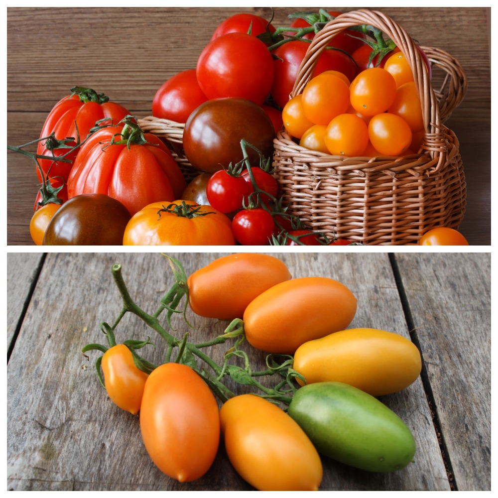 Лучшие сорта томатов для длительного хранения в свежем виде