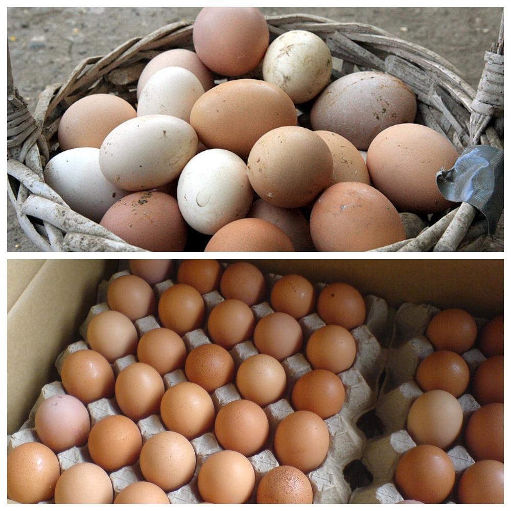 Как хранить инкубационные яйца до закладки в инкубатор