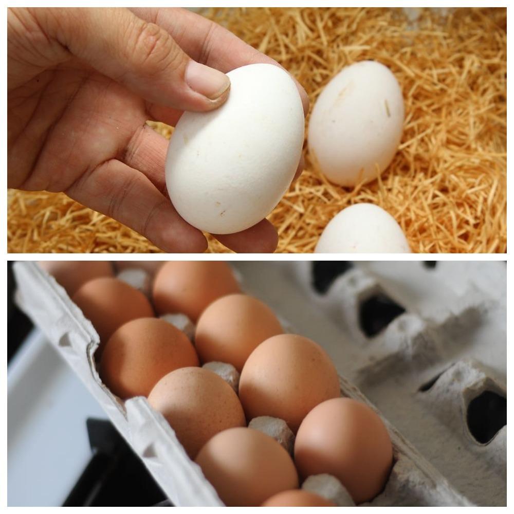 Как хранить яйца в холодильнике