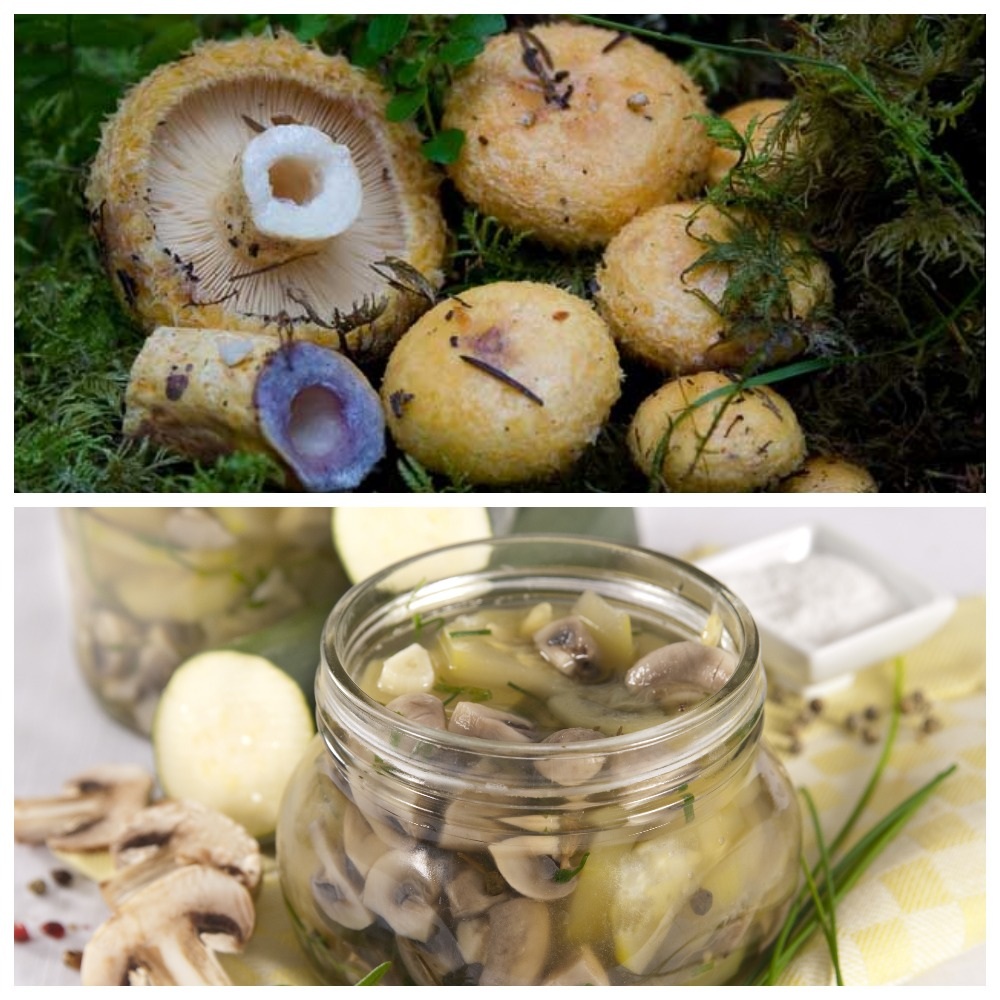Сколько можно хранить в холодильнике соленые грибы