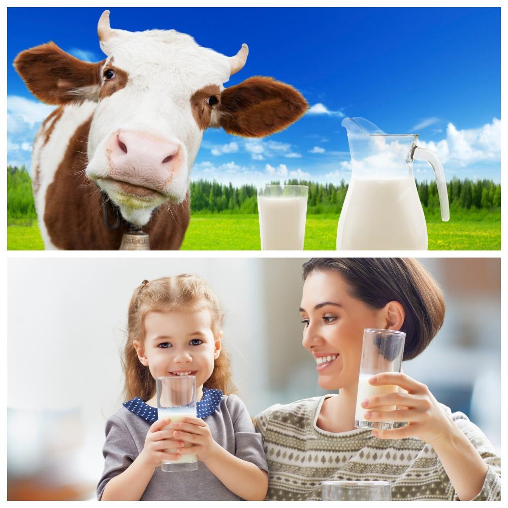 Сколько обычно хранится молоко в холодильнике