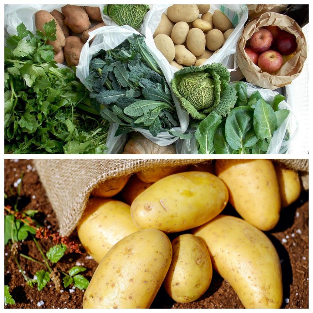 Хранение овощей в домашних условиях