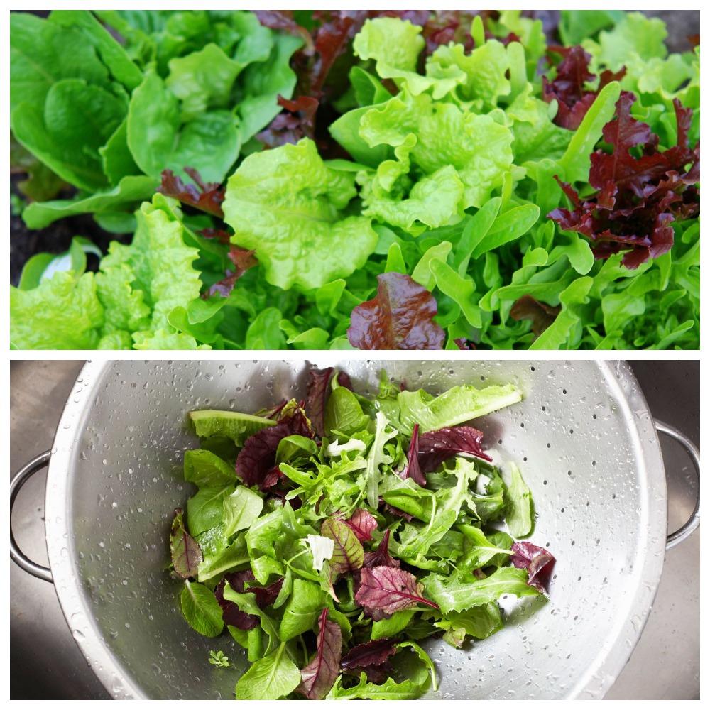 Как правильно хранить листья салата в холодильнике