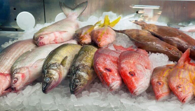 Хранение охлажденной рыбы
